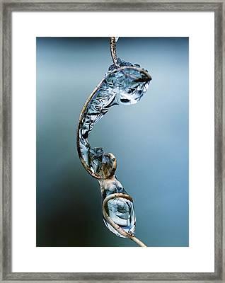 Winter's Snare Framed Print