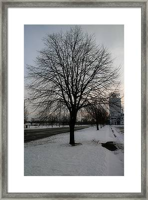 Winter's Tree Framed Print