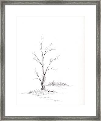 Winter's Tree Framed Print