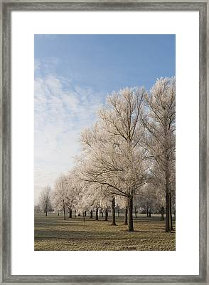Winter's Trees Framed Print