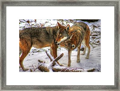 Winter's Warmth Framed Print by Steve Ratliff