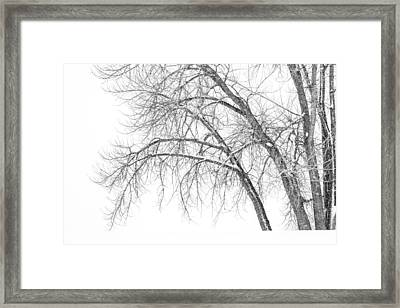 Winter's Weight Framed Print by Darren  White