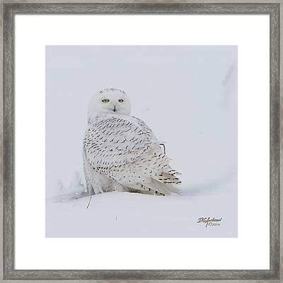 Winters White Framed Print