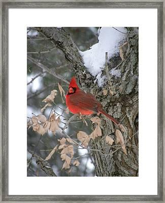 Winters Wonders Framed Print by Peggy  McDonald