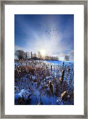 Wintertails Framed Print by Phil Koch
