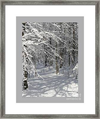 Wintery Woodland Shadows Framed Print