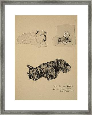 Wire-haired Terrier, Aberdeen And West Framed Print by Cecil Charles Windsor Aldin