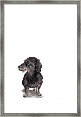 Wirehaired Dachshund - Rauhaardackel Framed Print by Barbara Marcus