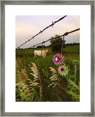 Framed Print featuring the photograph Wisconsin Evening by Viviana  Nadowski