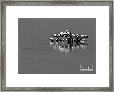 Wisconsin River Framed Print by Steven Ralser