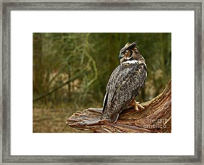 Wisdom Awaits Majestic Great Horned Owl Framed Print