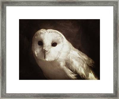 Wisdom Of An Owl Framed Print