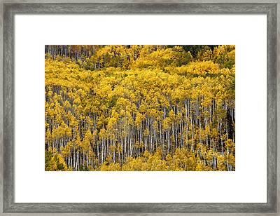 Wisdom Of Trees Framed Print