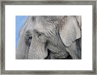 Wisdom With Age Framed Print