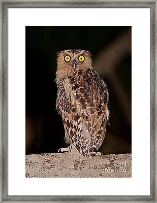 Wise Eyes.  Framed Print
