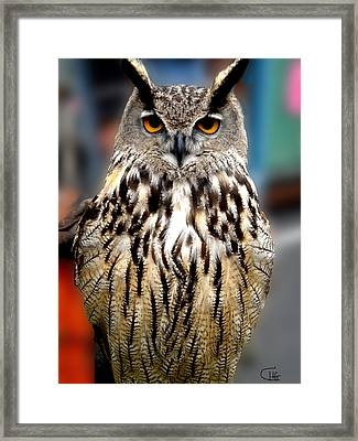 Wise Forest Mountain Owl Spain Framed Print