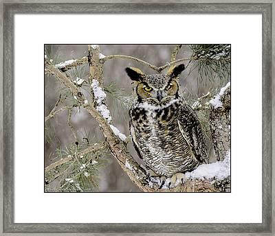 Wise Old Great Horned Owl Framed Print