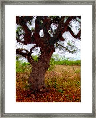 Da214 Wise Old Tree By Daniel Adams Framed Print