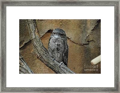 Wise Owl Framed Print by Mark McReynolds