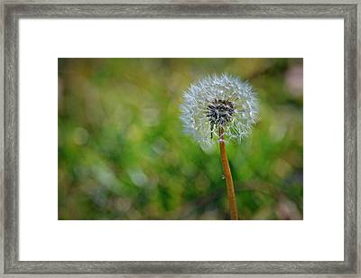 Wish And A Dream Framed Print by Mary Zeman