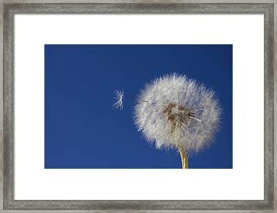 Wish Granted Framed Print