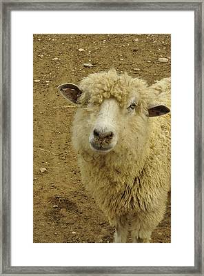 Wish I Could See A Lassie... Framed Print
