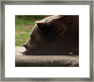 Framed Print featuring the photograph Wish I Was A Polar Bear by B Wayne Mullins