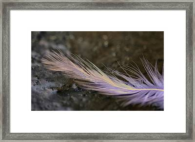 Wish Upon A Feather Framed Print