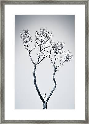 Wishbone Tree Framed Print