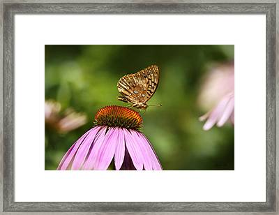 Wished For Pink Framed Print by Christina Rollo