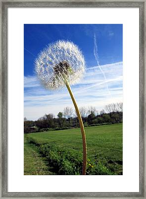 Wishes Or Weeds Framed Print by Andrea Dale