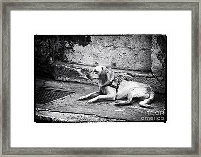 Wishing For A Friend Framed Print