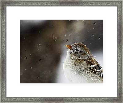 Wishing Upon A Snowflake  Framed Print