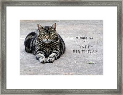 Wishing You A Happy Birthday Tabby Framed Print by Michele Wright