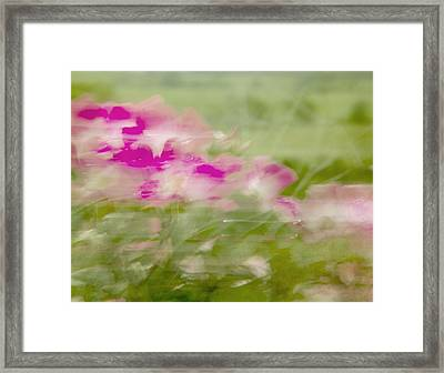 Framed Print featuring the photograph Wisp by Linde Townsend
