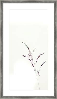Wisp Framed Print