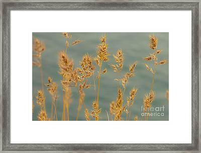 Wispy Grass Framed Print by Sarah Crites