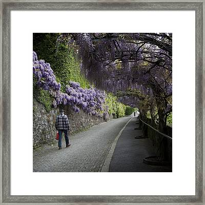 Wisteria And Plaid Framed Print