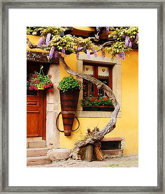 Wisteria And Yellow Wall In Alsace France Framed Print
