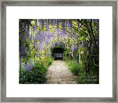 Wisteria Archway  Framed Print by Tim Gainey