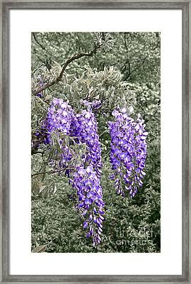 Wisteria Blossom Clusters Abstract Framed Print by Byron Varvarigos