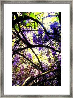 Wisteria Branches Framed Print by Jodie Marie Anne Richardson Traugott          aka jm-ART