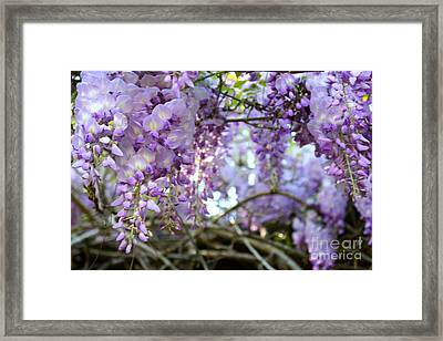 Wisteria Dream Framed Print by Cathy Dee Janes