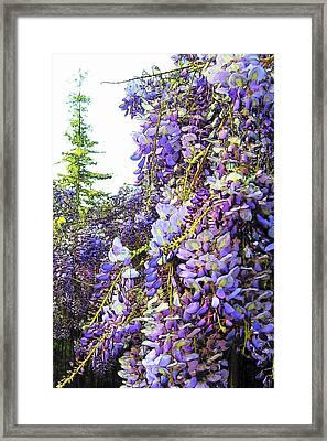 Framed Print featuring the photograph Wisteria - Fun Version 2 by Jodie Marie Anne Richardson Traugott          aka jm-ART