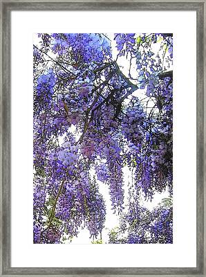 Framed Print featuring the photograph Wisteria - Fun Version 3 by Jodie Marie Anne Richardson Traugott          aka jm-ART