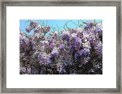 Framed Print featuring the photograph Wisteria - Fun Version by Jodie Marie Anne Richardson Traugott          aka jm-ART