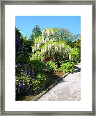 Wisteria Garden Framed Print