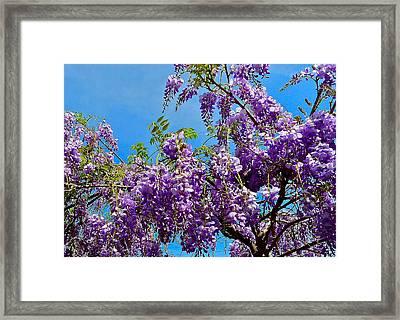 Wisteria In Bloom Framed Print