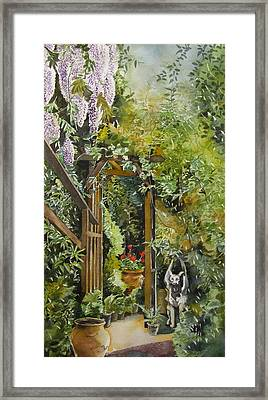 Wisteria In Blooms Framed Print by Alfred Ng