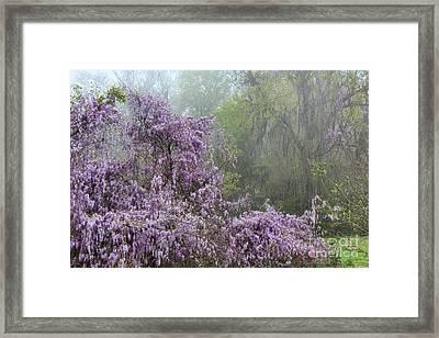 Wisteria In The Mist Framed Print by Leslie Kirk